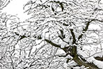 snow-on-tree-winter-background-1113tm-bkgd-133