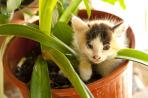 Kitten on Samos