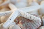 White Finger Starfish