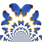 Kaleidoscopic Butterflies
