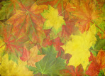 A beautiful vintage autumn background
