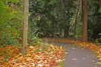 fall-pathway_fk8P28Ou