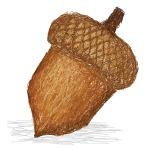 acorn_M1CAg1vd