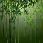 bamboo_fJ8YfC8_