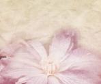 Beautiful Flower Wedding Retro Background