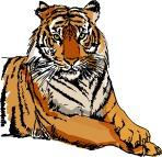 tigre-col-1113fg-v-851