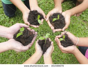 stock-photo-hands-holding-sapling-in-soil-surface-161599079