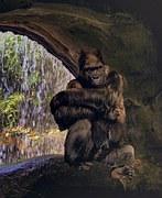 gorilla-899243__180