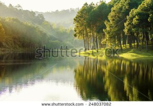stock-photo-pang-ung-reflection-of-pine-tree-in-a-lake-meahongson-thailand-248037082