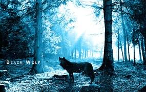 wolf-243927__180