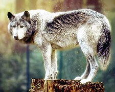 wolf-painting-981129__180