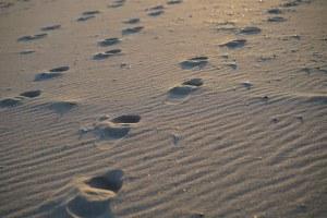 beach-630466__340