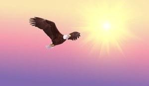 bald-eagle-521492__180