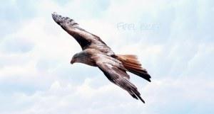 freedom-589576__340