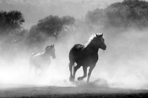 horse-430441__340