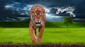 tiger-1100914__180