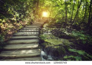 stock-photo-mystic-journey-ahead-a-quiet-lane-on-a-beautiful-forest-with-stream-129465749