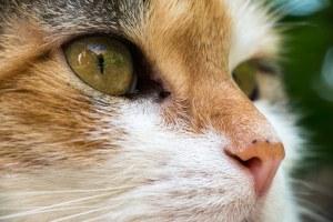 cat-1379035__340