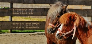 horses-1348558__340