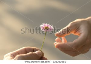 stock-photo-hand-gives-a-wild-flower-with-love-romance-feelings-333702980