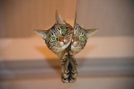 cat-697113__180
