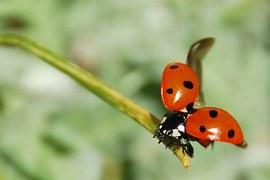 ladybug-55056__180