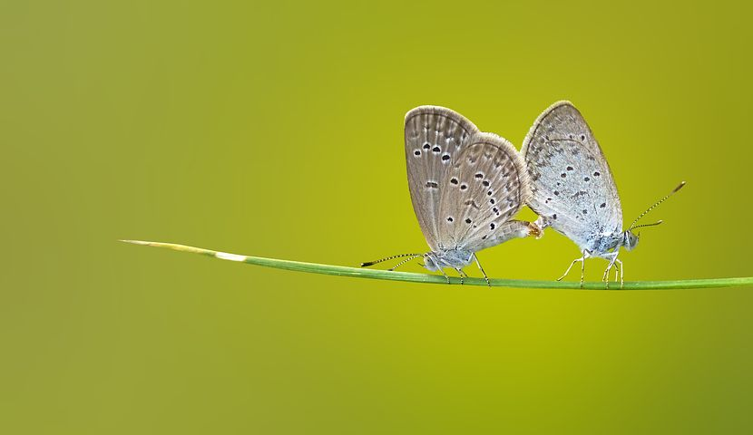 butterfly-1057768__480
