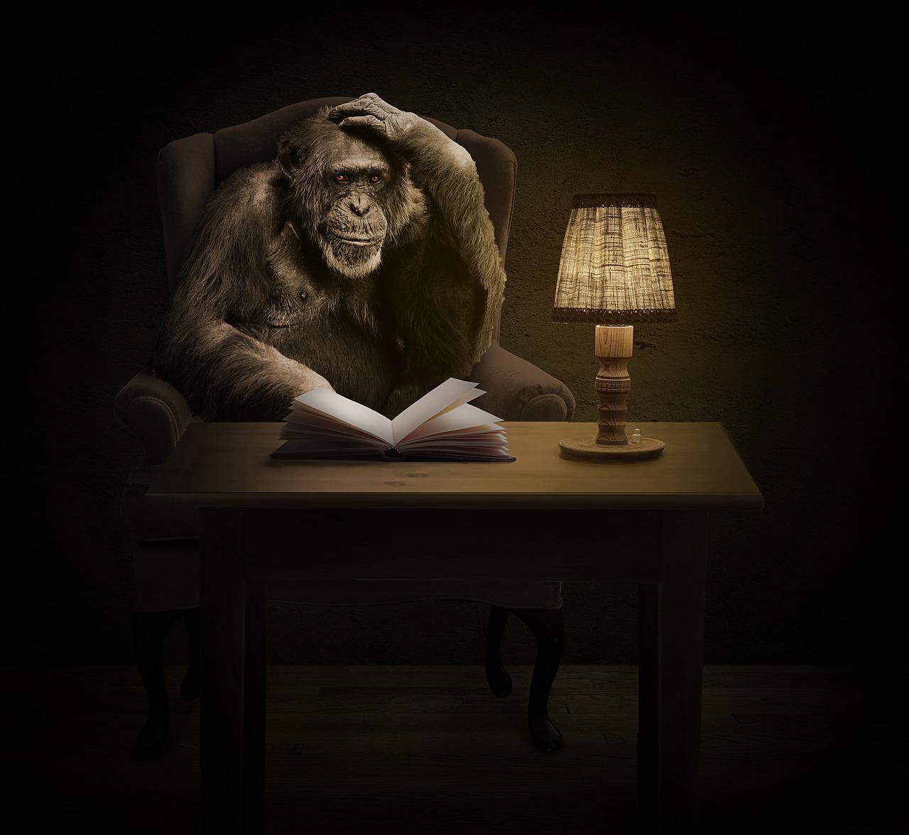 monkey-1757972_1280