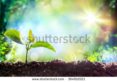 stock-photo-growing-sprout-beginning-of-a-new-life-364952021