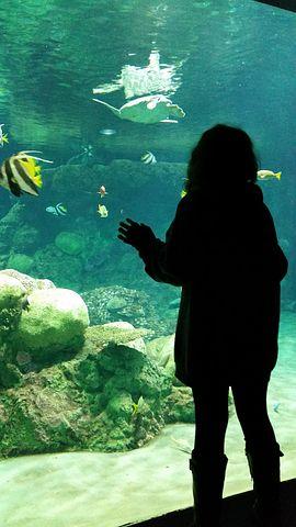 aquarium-1115778__480