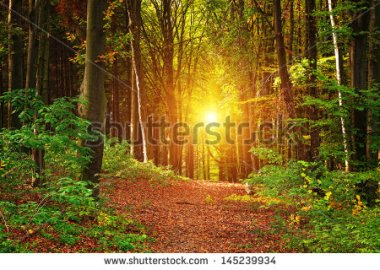 stock-photo-forest-landscape-145239934