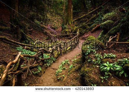stock-photo-path-through-puzzlewood-forest-of-dean-420143893