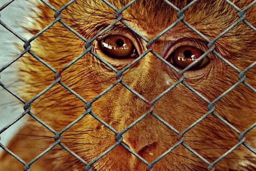 animal-welfare-1119375__340