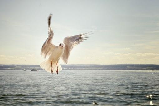 gull-192909__340