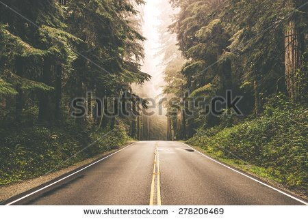 stock-photo-foggy-straight-redwood-highway-in-northern-california-united-states-278206469
