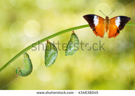stock-photo-life-cycle-of-tawny-rajah-butterfly-with-caterpillar-and-chrysalis-434638045