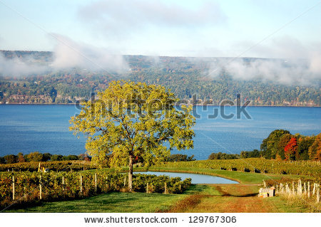 stock-photo-a-tree-and-vineyard-by-fingers-lake-129767306