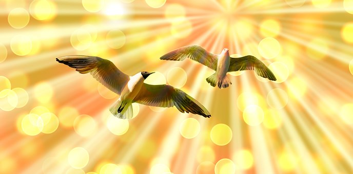 gulls-2633864__340
