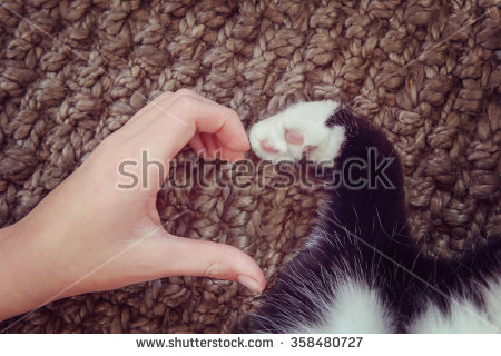 stock-photo-person-s-hand-and-a-cat-s-paw-making-a-heart-shape-instagram-toned-effect-358480727