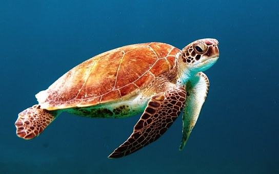 turtle-863336__340