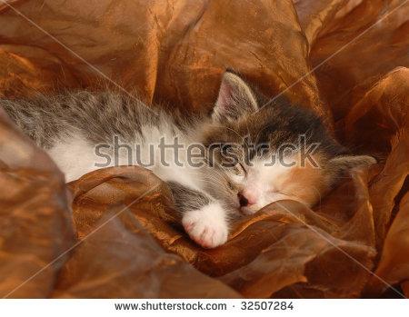 stock-photo-orphaned-three-week-old-calico-kitten-sleeping-32507284 (1)