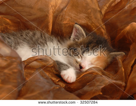 stock-photo-orphaned-three-week-old-calico-kitten-sleeping-32507284 (1)