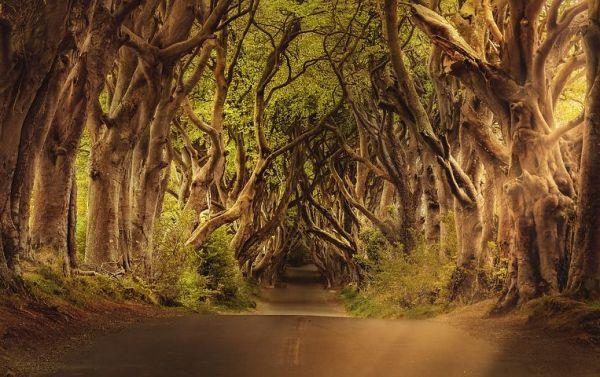 trees-3464777__480