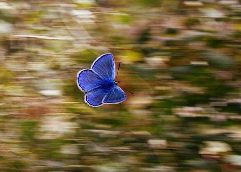 butterfly-2837589__340