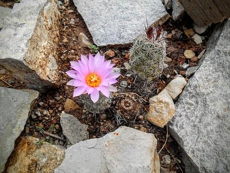 flower-1346598__340