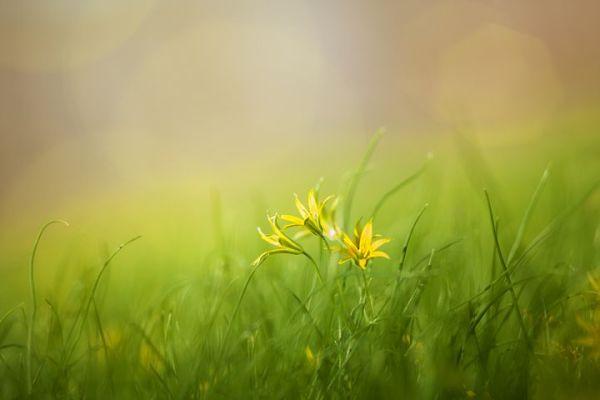 grass-3085457__480