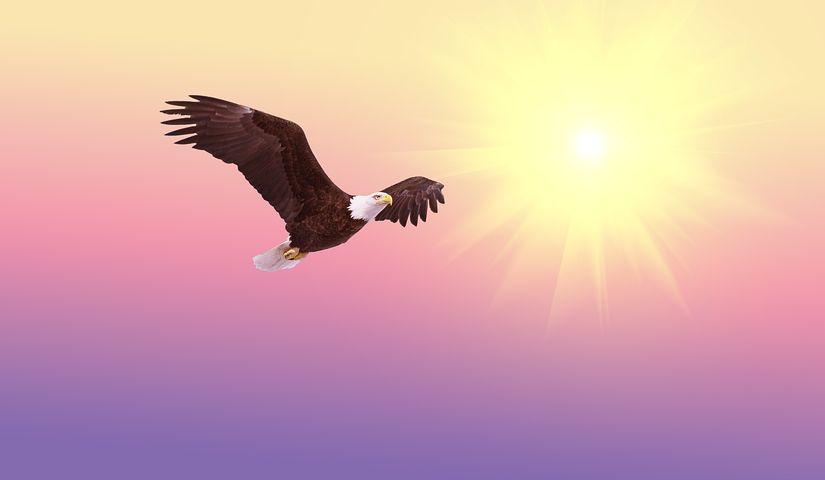 bald-eagle-521492__480