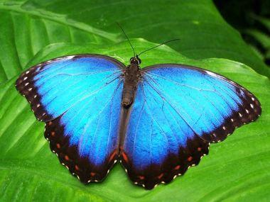 butterfly-142506__480