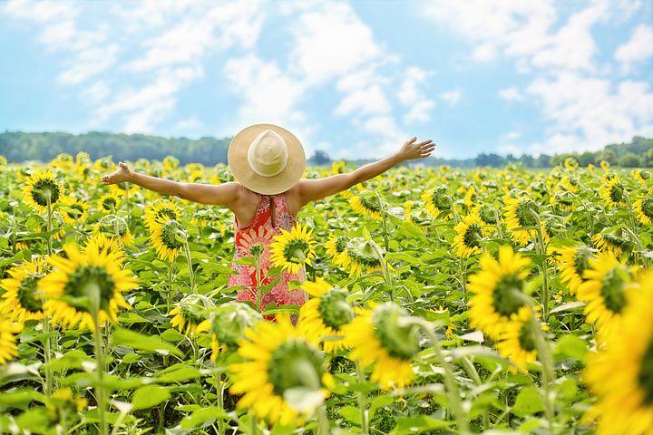sunflowers-3640938__480